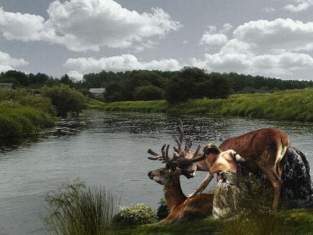 Фото Девушка сидит рядом с оленями, фотограф Серега