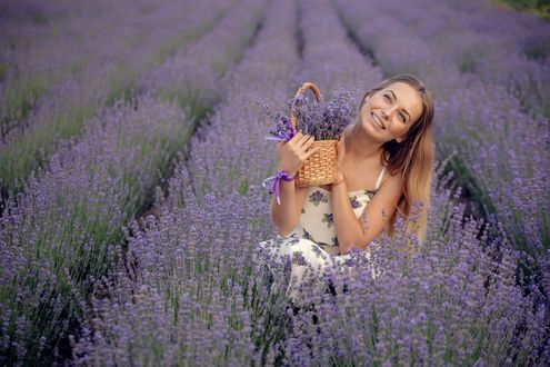 Фото Девушка в лавандовом поле