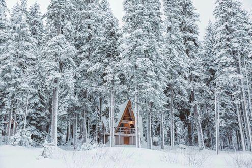 Фото Дом, стоящий в заснеженном лесу