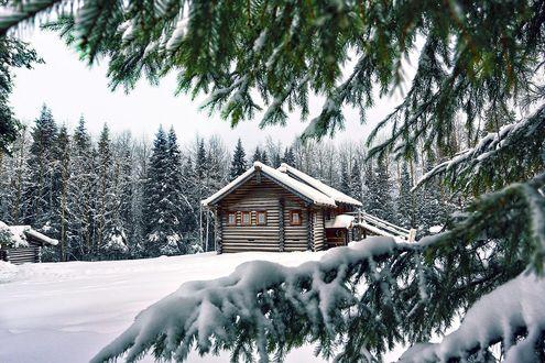 Фото Через ветви заснеженных елей открывается вид на деревянный дом