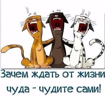 Фото Коты орут не только в марте (Зачем ждать от жизни чуда - чудите сами!) / три кота разной масти рыжий черный и белый обнялись лапами и орут