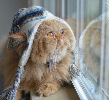 Фото Пушистый персиковый кот в вязаной шапочке с кисточками облокотился на подоконник и смотрит в окно