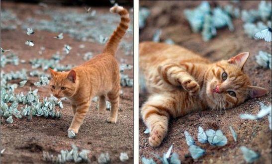 Фото Рыжая кошка в окружении бабочек
