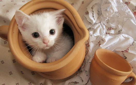Фото Белый котенок сидит в кувшине