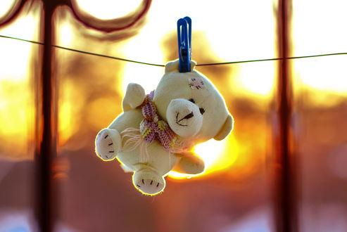 Фото Игрушка медвежонок сушится на веревке