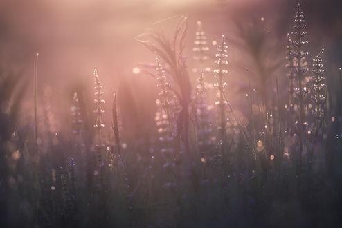 Фото Полевые цветы в утренней росе, by Trichardsen
