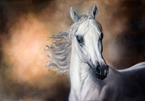 Фото Арабская белая лошадь, by IrenaDem
