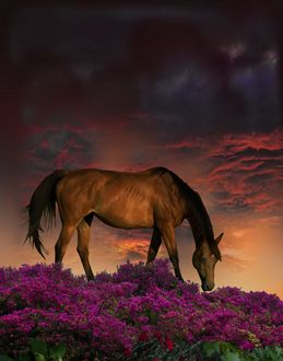 Фото Лошадь на цветочном поле, фотограф Peter Holme III