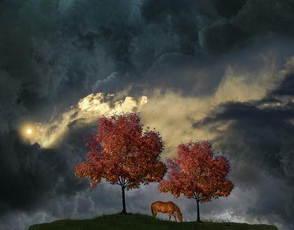 Фото Лошадь стоит между деревьями под мрачным небом, фотограф peter holme