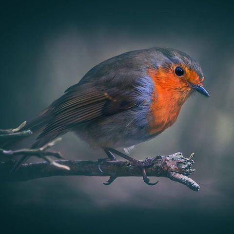 Фото Птичка сидит на ветке