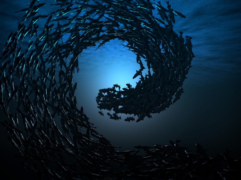 Под водой фото рыбы 7