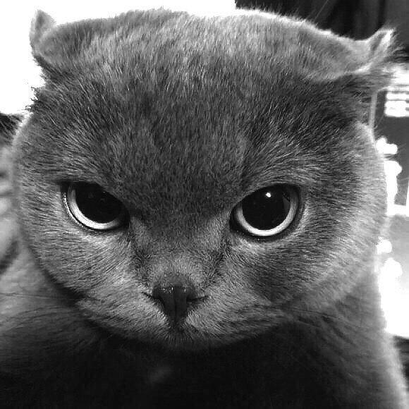 Я и твой кот в картинках