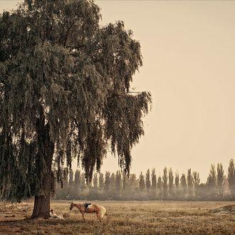 Фото Влюбленные сидят у дерева, а напротив стоит лошадь, фотограф Dan Hecho