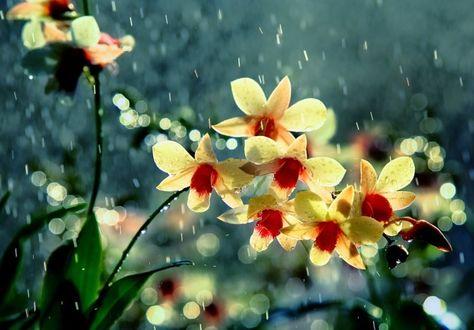 Фото Цветы под дождем на фоне природы