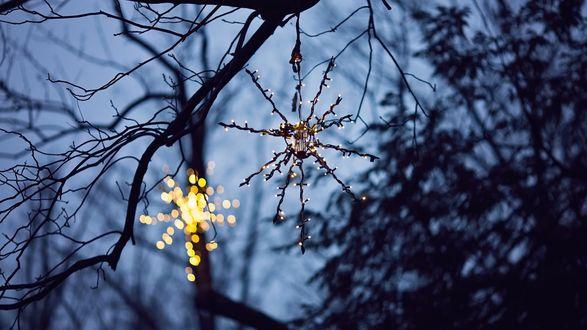 Фото Гирлянда в виде снежинки висит на ветке дерева