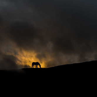 Фото Лошадь на фоне мрачного неба, фотограф Тодор Танев