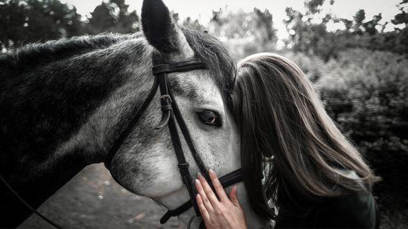 Фото Девушка с лошадью, фотограф Потапов Михаил