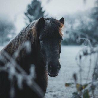 Фото Лошадь смотрит в камеру