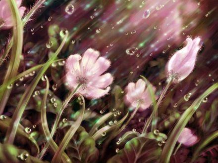 Фото Розовые цветы под каплями дождя