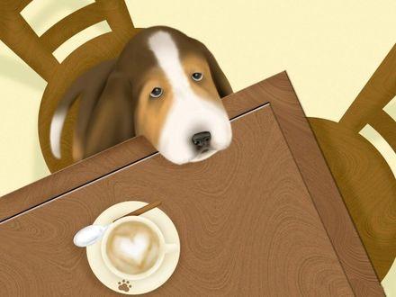 Фото Влюбленный пес с грустными глазами сидя на стуле, положил голову на стол, на котором стоит блюдце с ложечкой, чашкой кофе с пенкой в виде сердечка