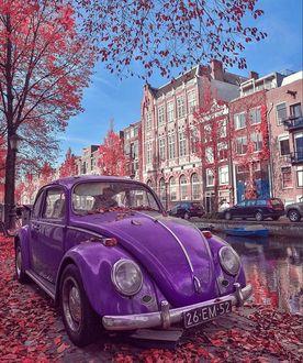 Фото У водоема стоит раритетный автомобиль, обсыпанный листьями