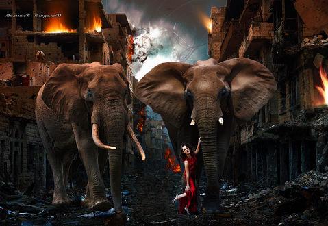 Фото Девушка в красном платье вместе со слонами выходит из горящего города. Фотограф Владимир Малышев