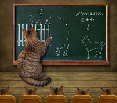 Фото Кот ведет урок для котят о защите от собак, фотограф Ирина Кузнецова