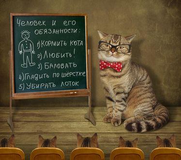 Фото Кот ведет урок для котят об обязанностях человека, фотограф Ирина Кузнецова
