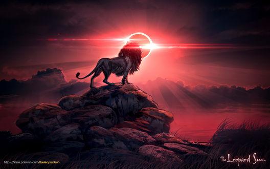 Фото Лев на фоне заката стоит на обрыве, by balaa