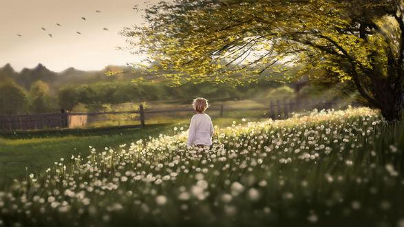 Фото Ребенок в поле из отцвевших одуванчиков, by Shikamuro
