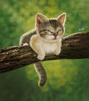 Фото Котенок лежит на ветке дерева, by cicakkia