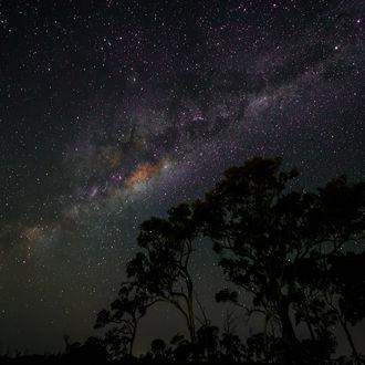 Фото Деревья на фоне ночного звездного неба (© Margo Fly), добавлено: 25.02.2017 04:03