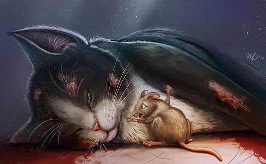 Фото Мышка обнимает лежащую кошку после аварии, by cicakkia