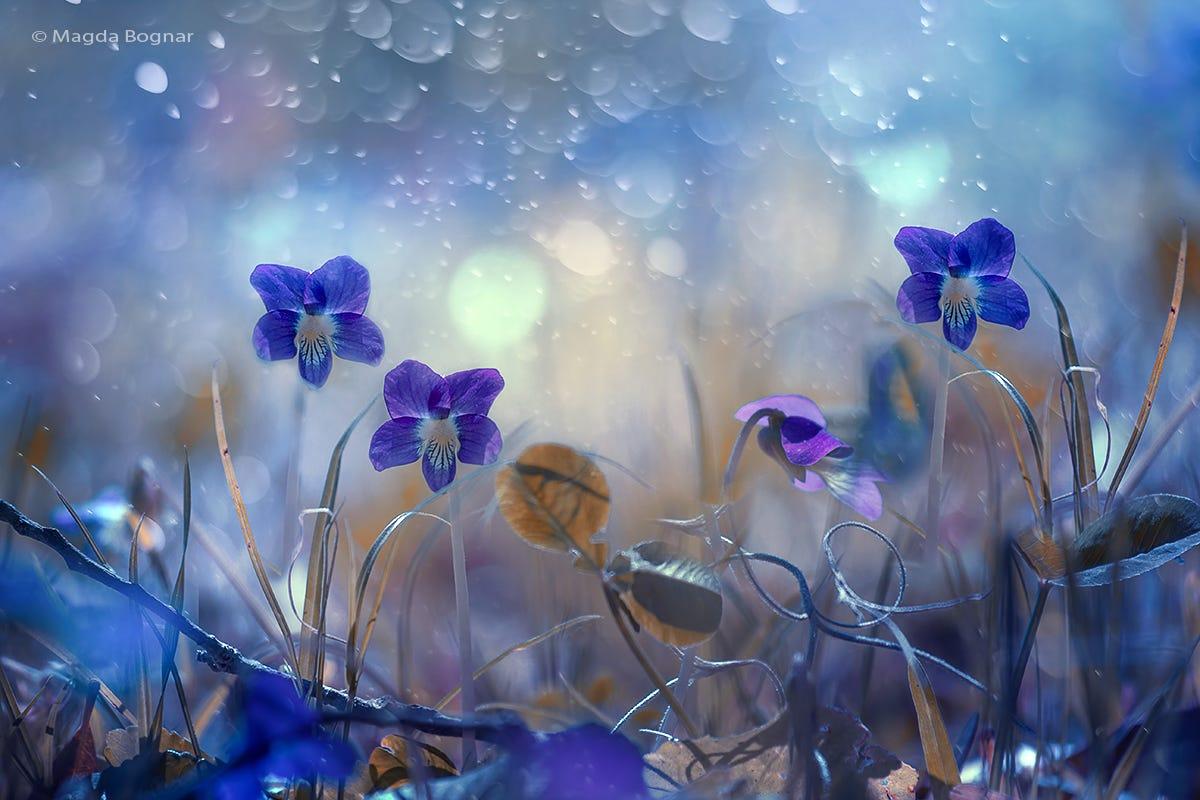 Голубые цветы на размытом фоне, фотограф Magda Bognar