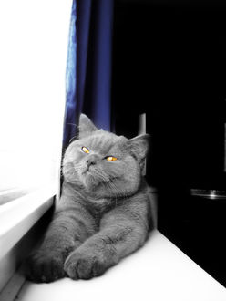 Фото Серый кот с желтыми глазами сидит на подоконнике