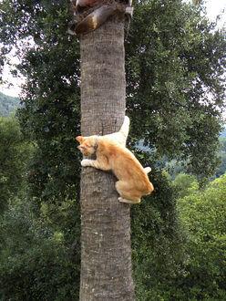 Фото Рыжий кот забрался на дерево