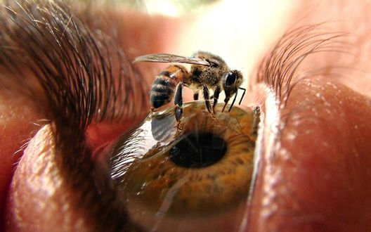 Фото Пчела сидит на глазу
