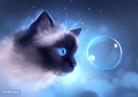 Фото Сиамский кот смотрит на мыльный пузырь, by Apofiss