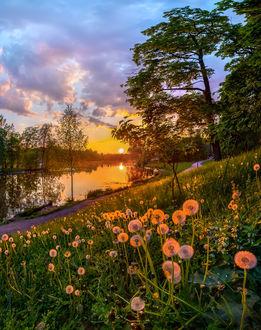 Фото Уходящее солнце освещает отцветшие одуванчики и реку, фотограф Лашков Федор