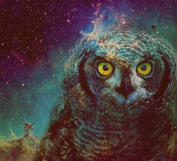 Фото Сова на фоне ночного звездного неба
