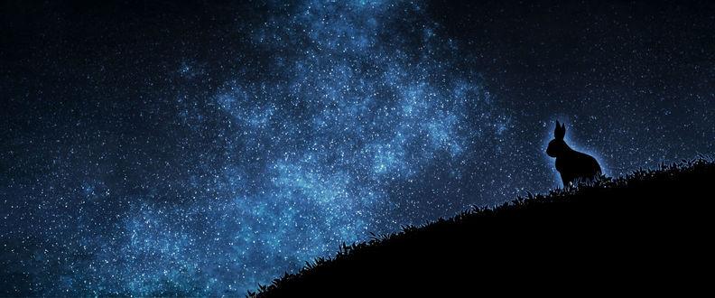 Фото Силуэт кролика на фоне ночного звездного неба