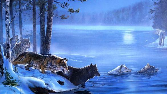 Фото Волки переправляются по воде на другой берег, на фоне зимнего пейзажа