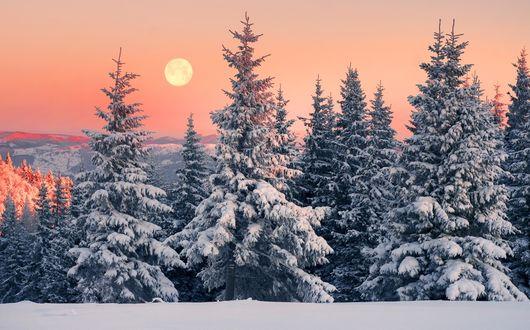 Фото Морозное утро в зимнем лесу