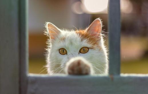 Фото Кот смотрит в окно, опершись лапой о стекло