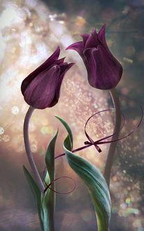 Фото Бордовые тюльпаны на фоне с боке, by GaL-Lina