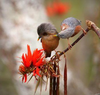 Фото Две птички на ветке дерева, фотограф Ashraf Siddiqui