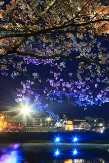 Фото Дерево сакуры в ночи, а на заднем плане теплоход