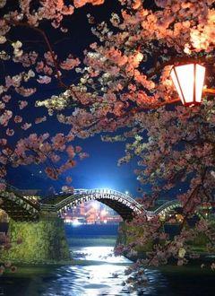 Фото В ночи над рекой висят ветки сакуры с фонарем и мост на заднем плане