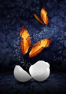 Фото Порхающие бабочки над скорлупой разбитого яйца, by amiens (© Margo Fly), добавлено: 19.03.2017 00:17
