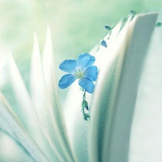 Фото Голубой цветок льна между страниц книги, by Sternenfern (© Arinka jini), добавлено: 19.03.2017 02:41